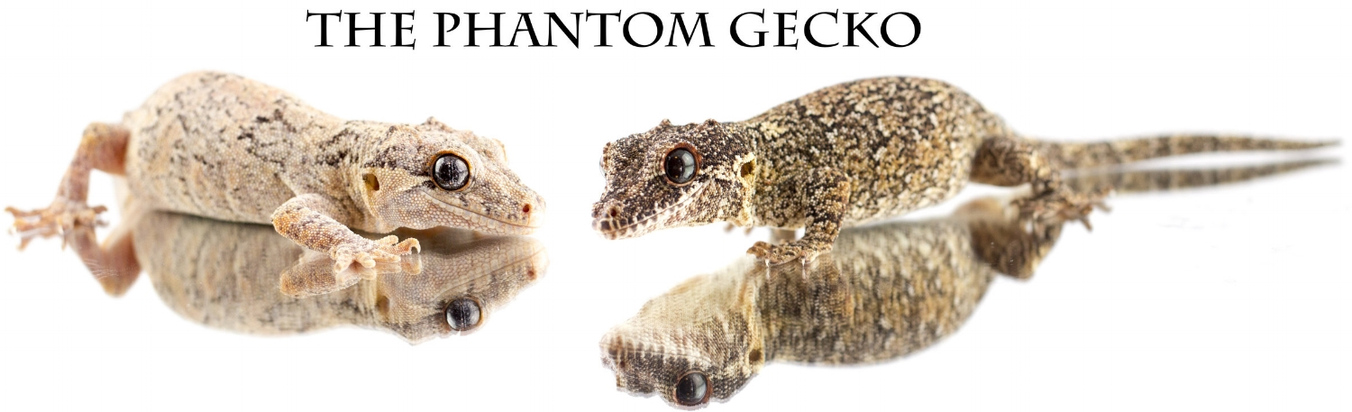 The Phantom Gecko