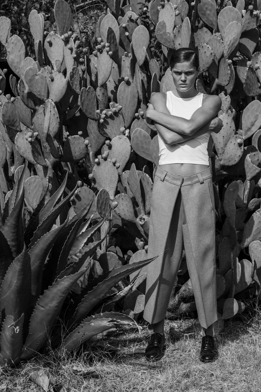 Blurring the Lines Series: Cactus