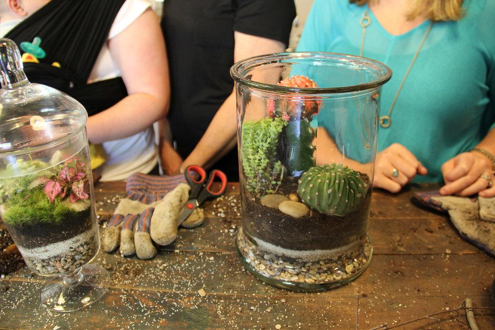 closs up cacti terrarium.jpg