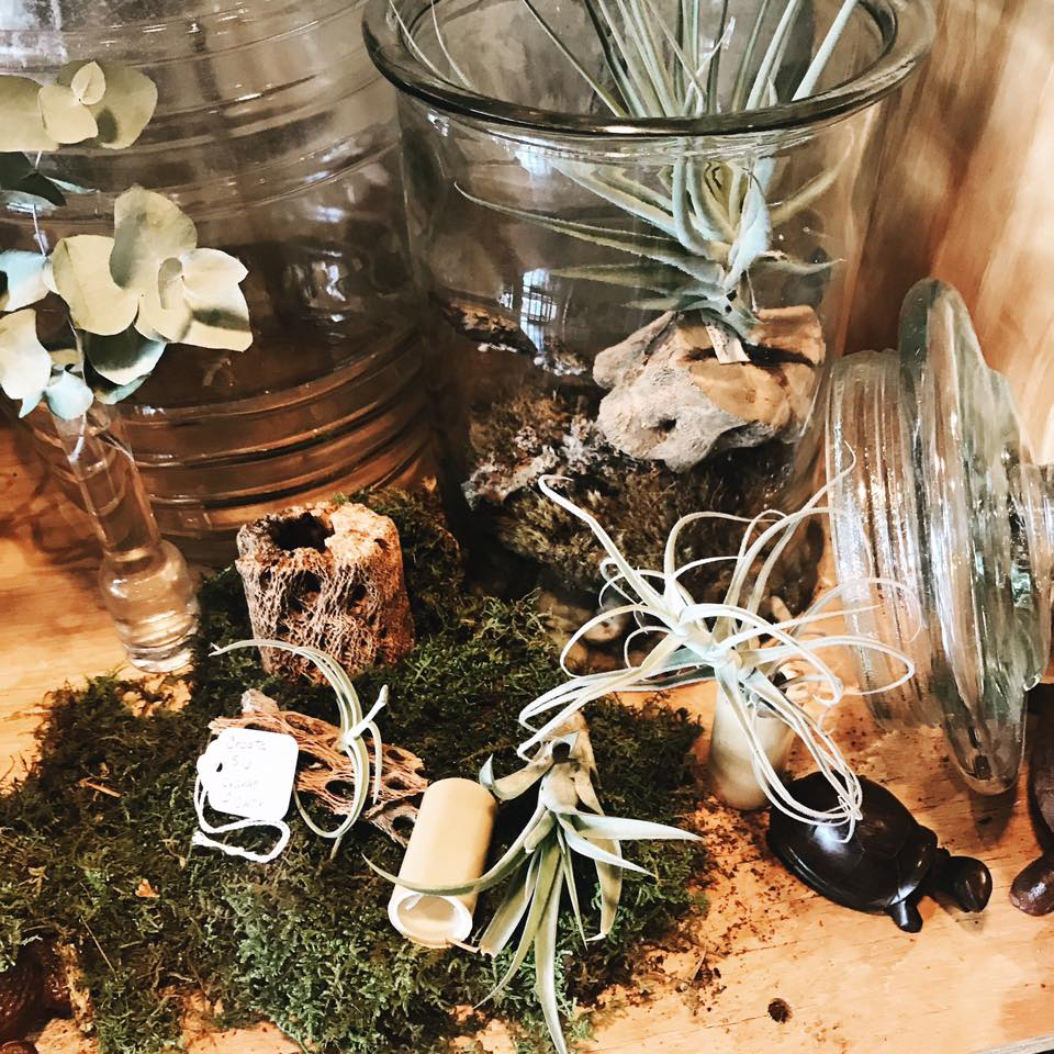 terrarium close up.jpg