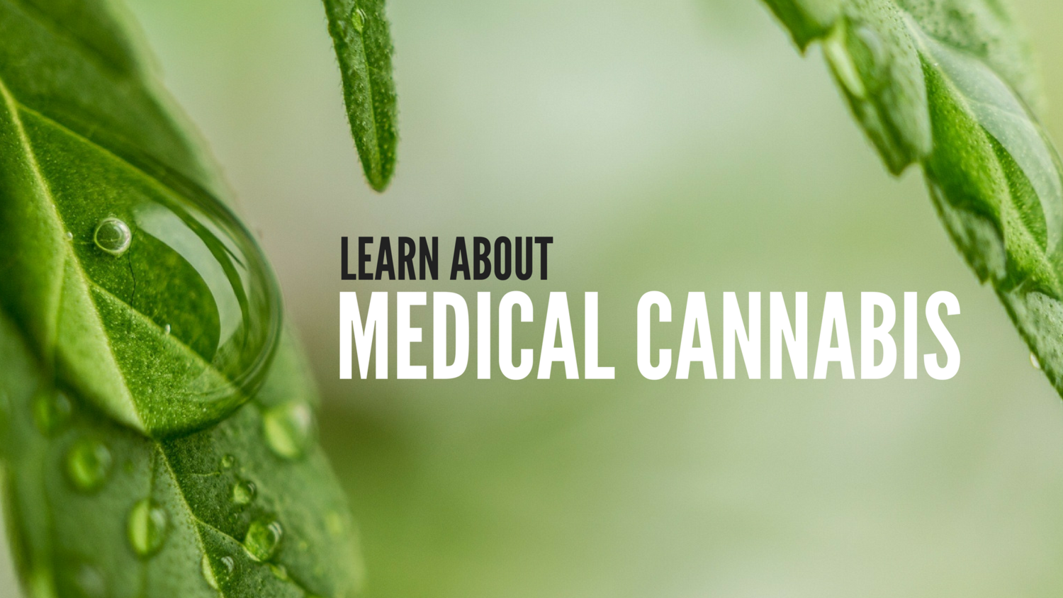 MEDICAL CANNABIS: YOUR QUESTIONS ANSWERED — Florida Medical Cannabis