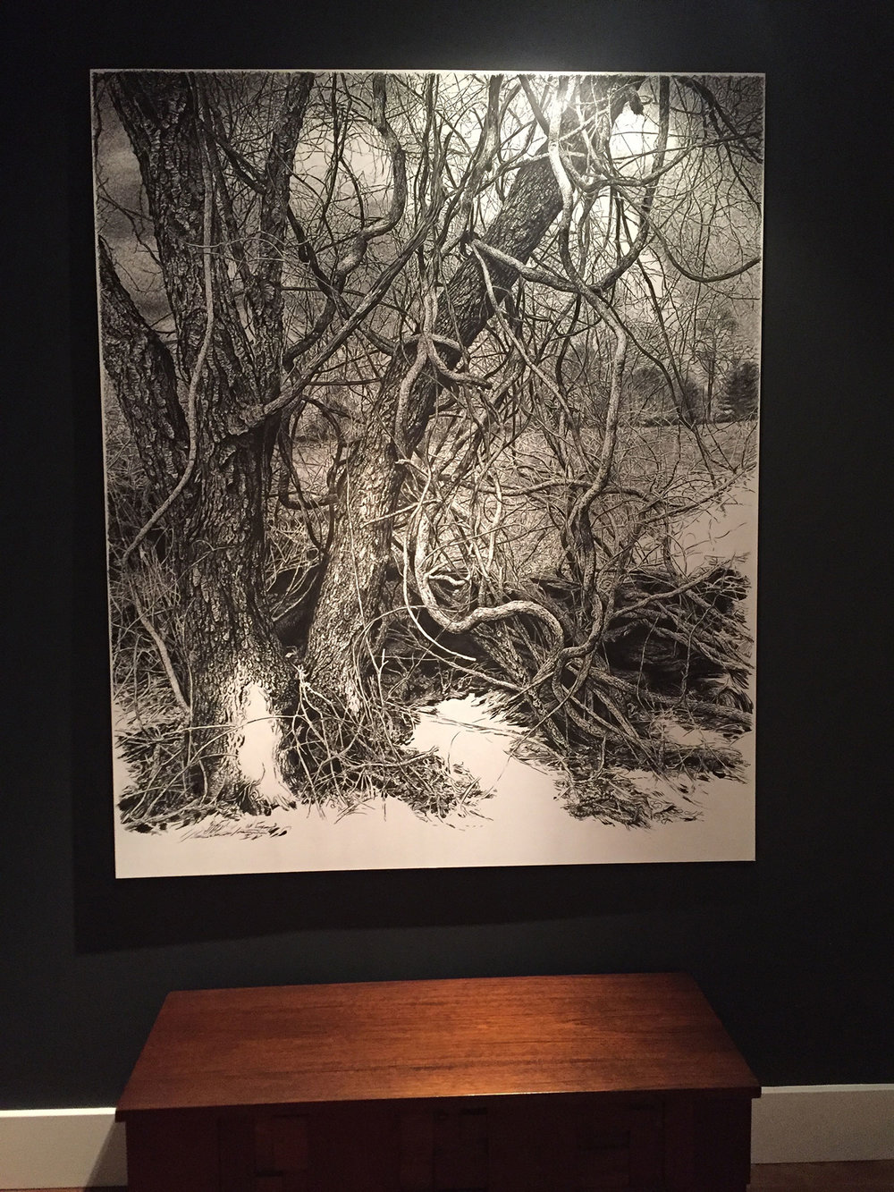 Rick Shaefer Oak, Charcoal on vellum