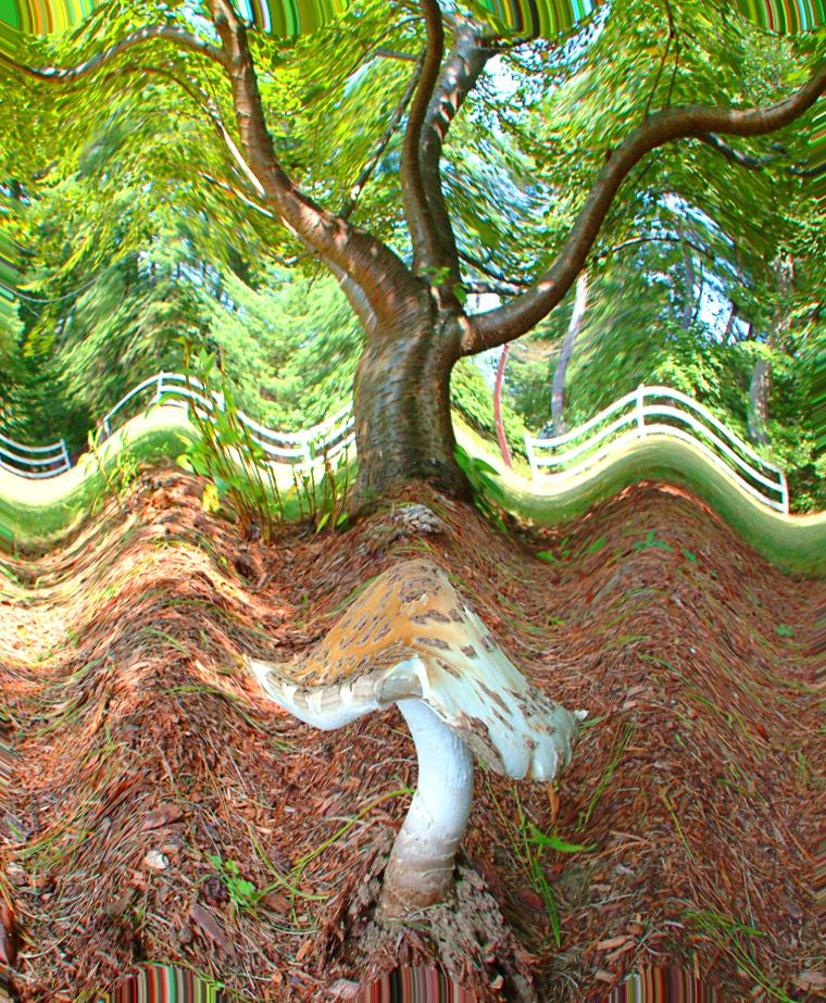 Mushroom and tree2.jpg