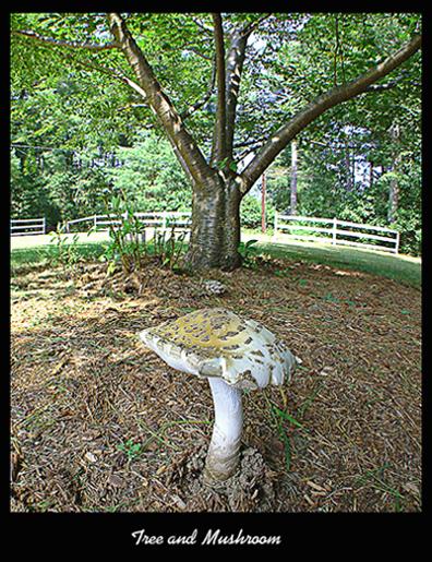 Tree and Mushroom.jpg
