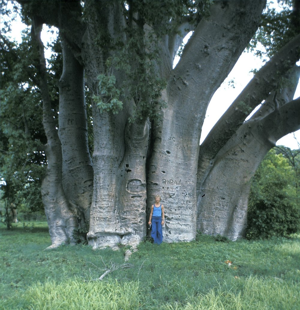 Baobab tree. Put Jeff there just to show scale.