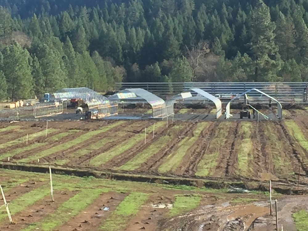 Here you can see Matt's building (12,000 ft sq) at the rear- the nearside wall structure going up and Jerrod and Kent's greenhouses in front.