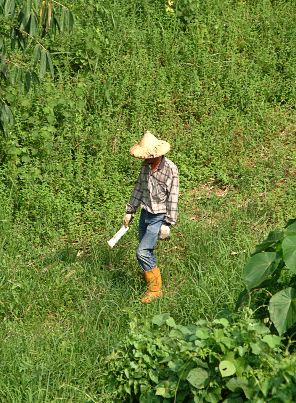 Plantation Worker