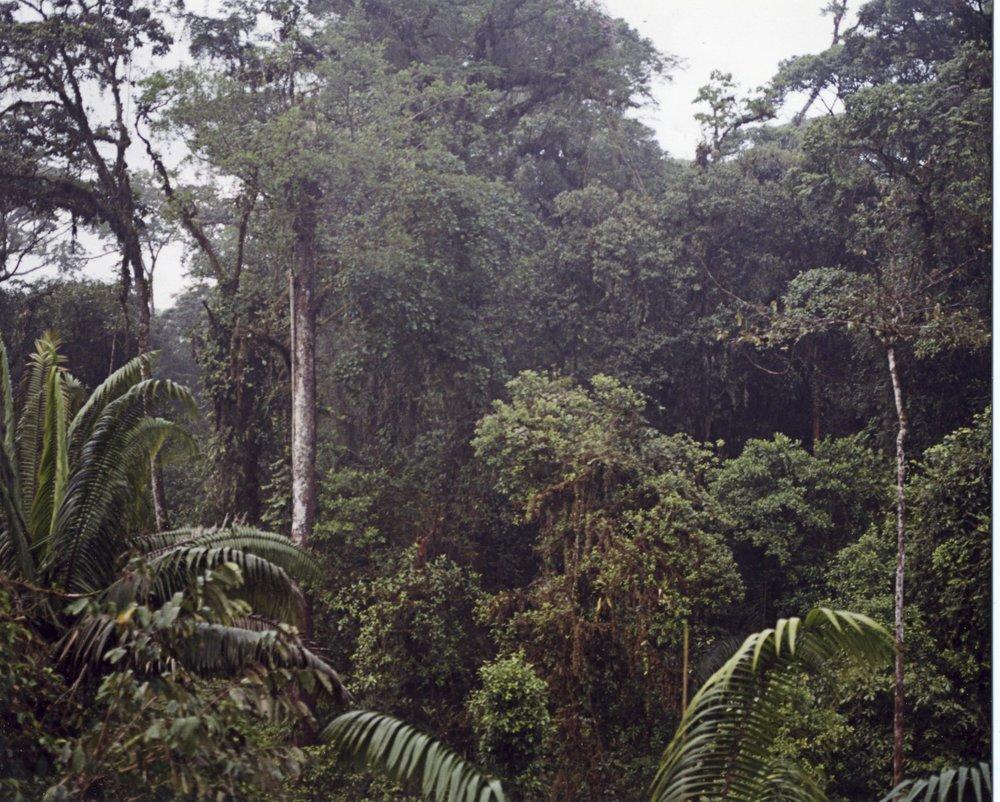 Lush Jungles