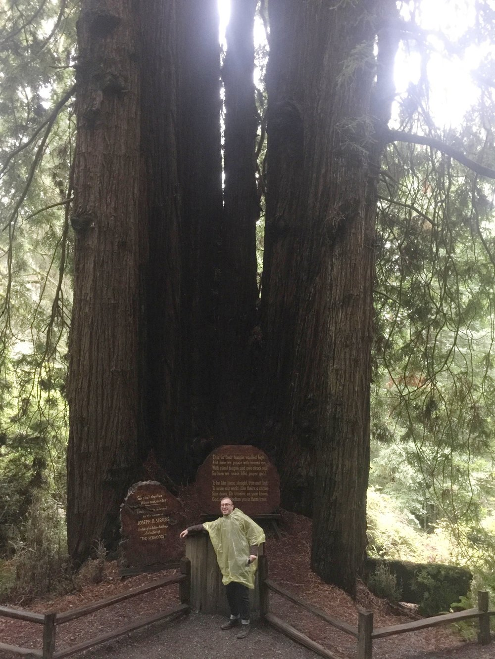 In honor of Joseph B Strauss who was a structural engineer and a poet. He had a passion for the Redwoods and wrote an ode to them.