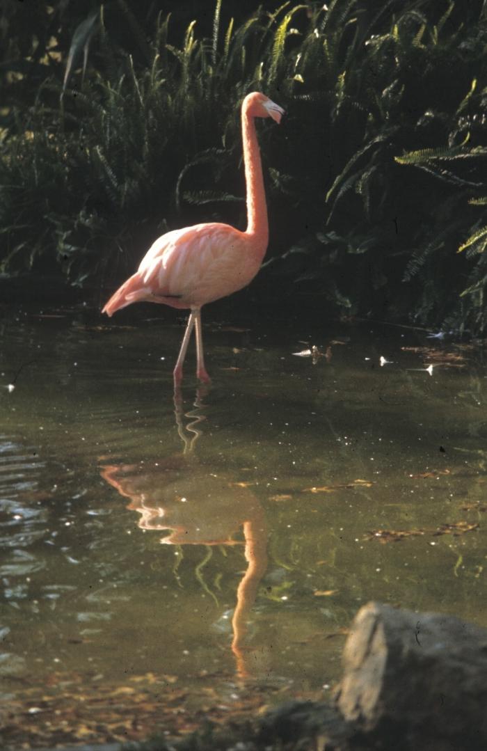 SA flamingo2.jpg