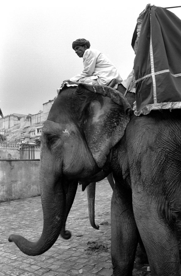 India-Elephants-05228-36a.jpg