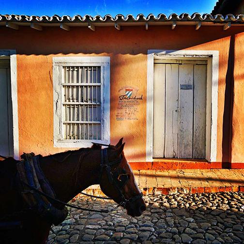 Horse in Trinidad Cuba