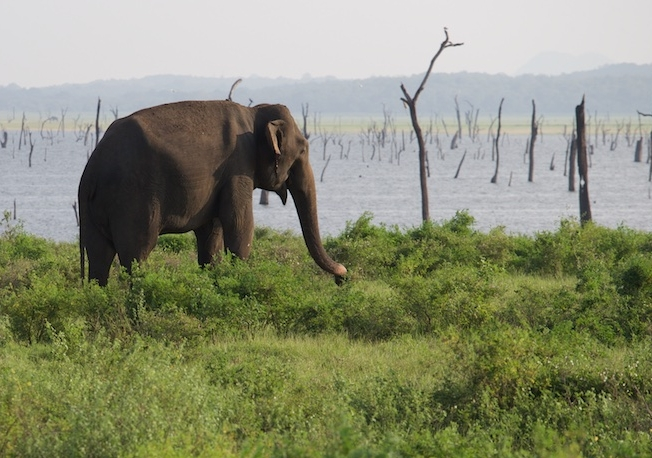 Sri-Lanka-11-17- C26O9469.jpg