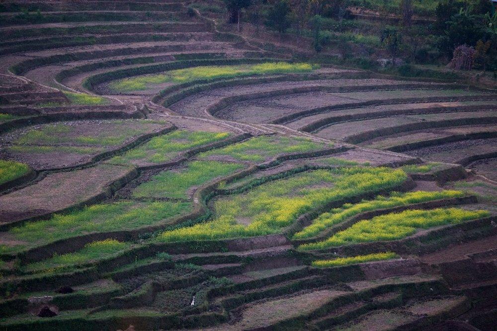 Nepal-11-17- C26O0854.jpg