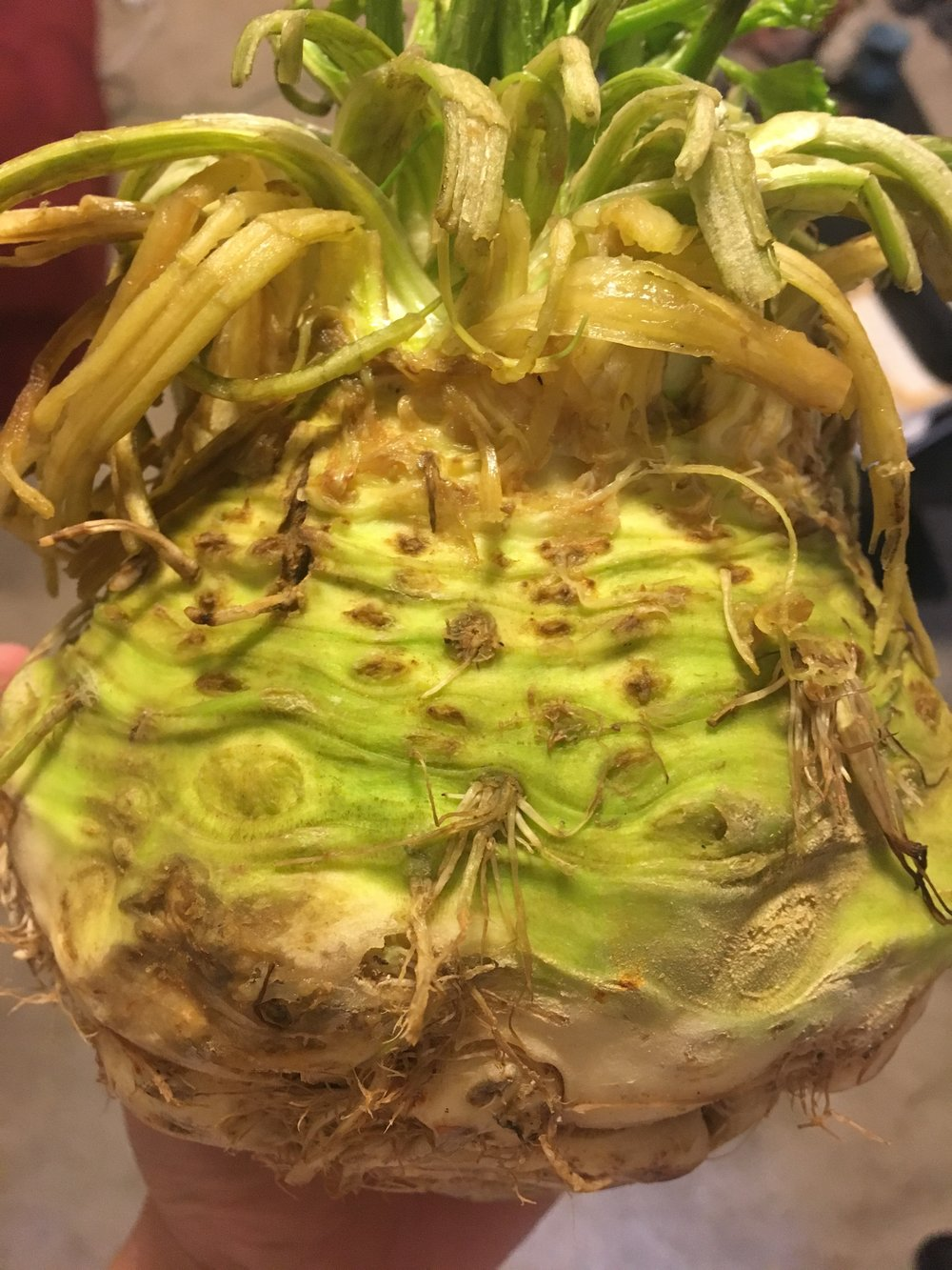 This is a celery root!
