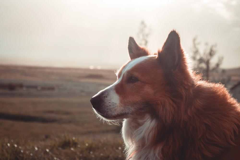hundsskömmin-1044753.jpg