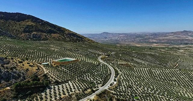 Still from the Nazca Photographic aerial showreel, Andalucía, Spain. (For the uninitiated, those are olive trees)! #dronestagram #drone #dronevideos #aerial #aerialvideo #aerialvideography #showreel #djiphantom #djiphantom34k #aerialphoto #aerialphotography #ig_spain #andalucía #andalusia #andaluciaviva #dronelife #djiphantom3 #droneoftheday #droneporn