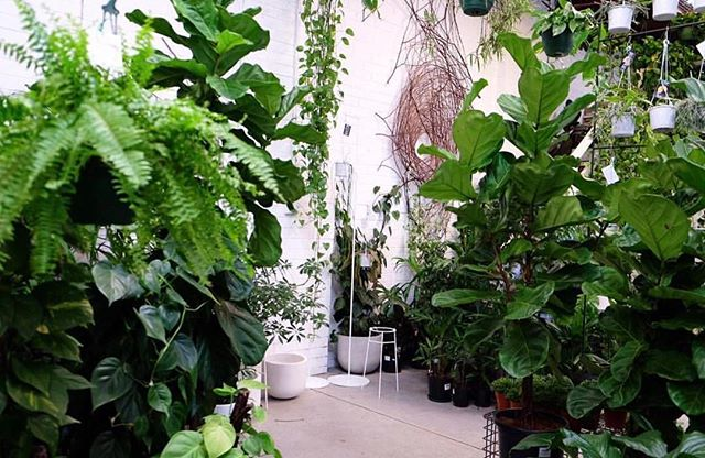 Totally swooning over this indoor plant situation and thinking of how I can turn my apartment into a jungle! Photo via @looseleaf__