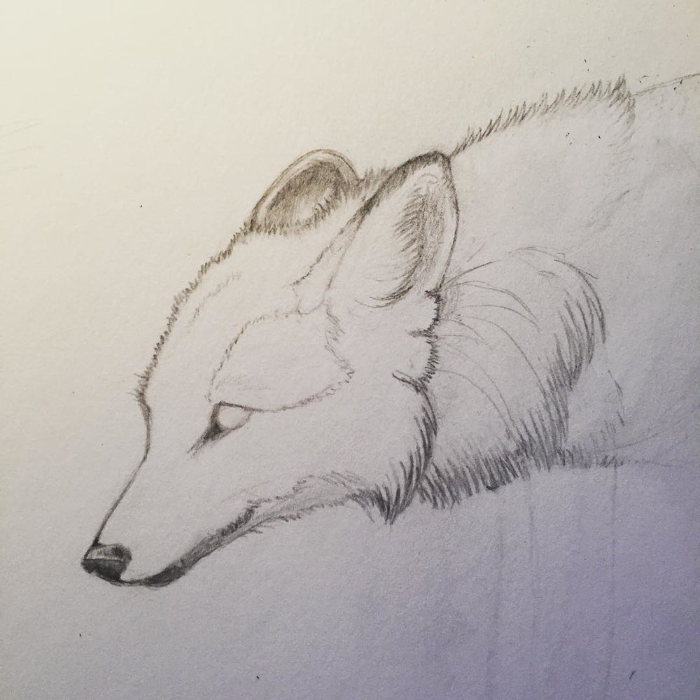 Mane Wolf. Pencil on paper.