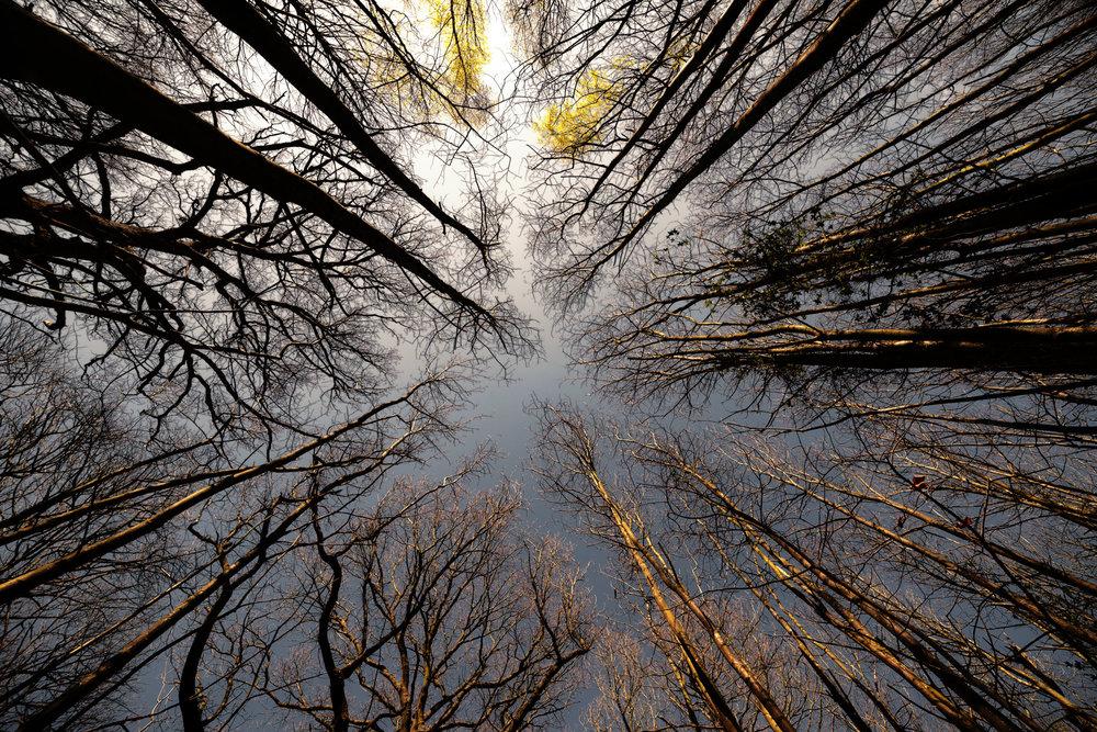 2019.04.10-Towering-Trees-32-WEB.jpg