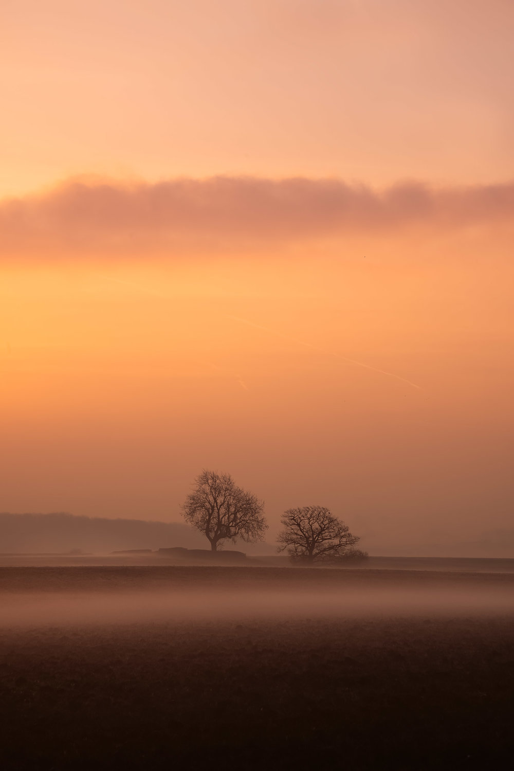 2019.02.16-Together-Foggy-Trees-WEB.jpg