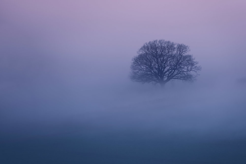 2019.02.28-The-Distant-Misty-Tree-32-WEB.jpg