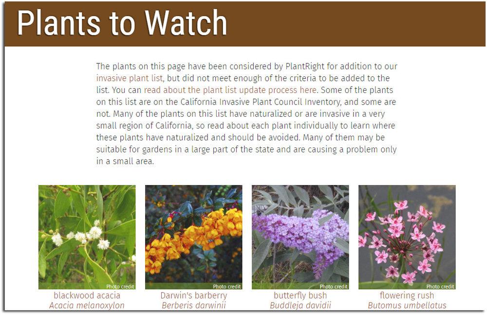 Plants-to-Watch-1.jpg