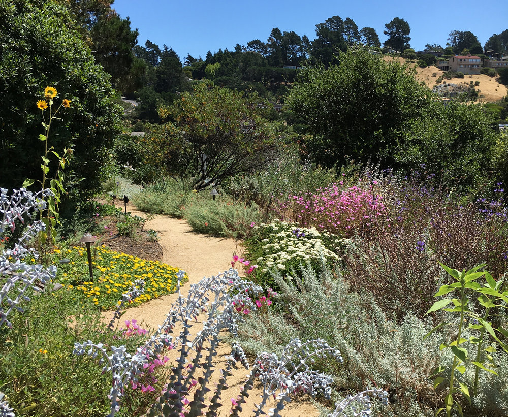 Kelly Kilpatrick designed this waterwise California-native garden in Tiburon. Photo: Kelly Kilpatrick