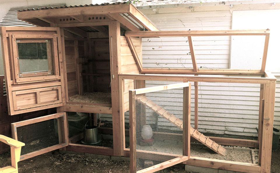 Many access points to get inside the coop.