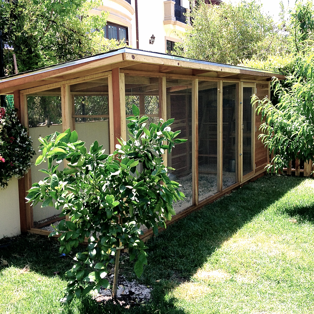 An orchard in Beverly Hills is a perfect place for a chicken coop.