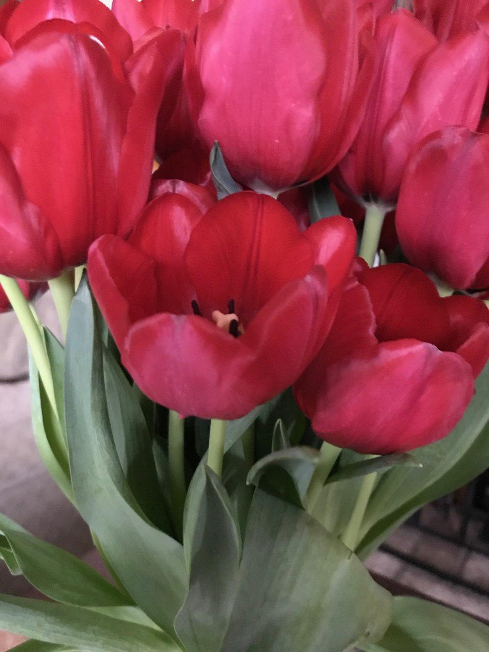 Tulips (1).jpeg