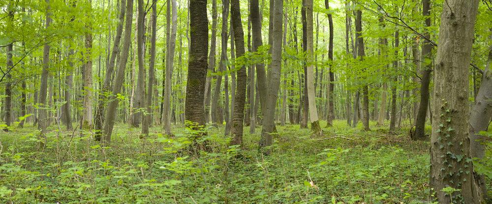 Seeing wood or trees?