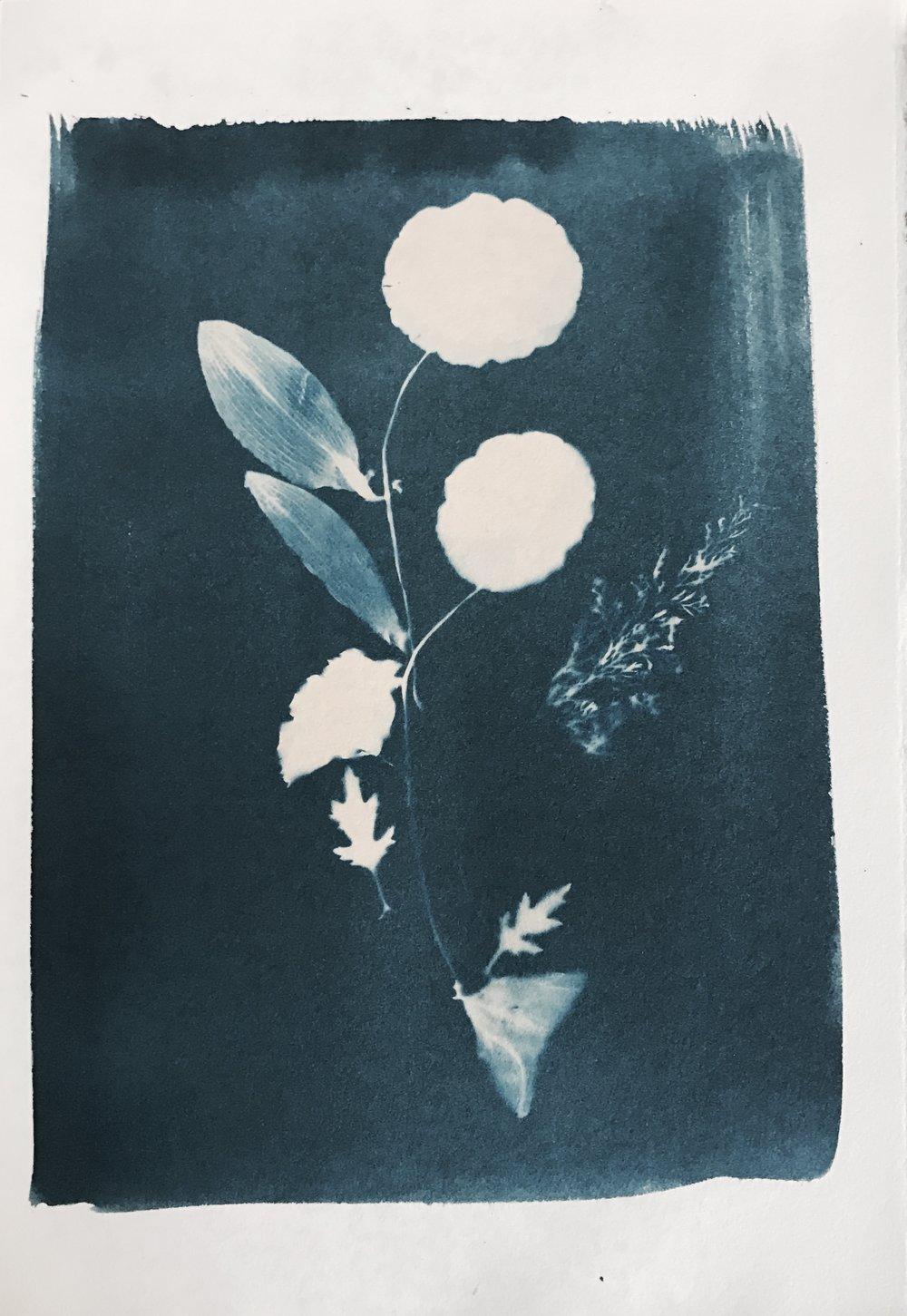 《植物57》35X47CM蓝晒纸本2017年.jpg