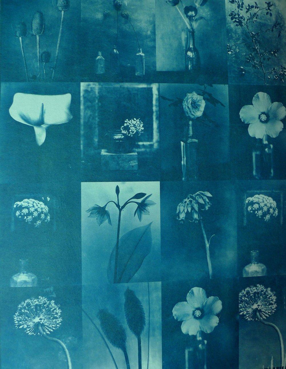 蓝晒 植物系列 6 19x27cm(小图)副本.jpg