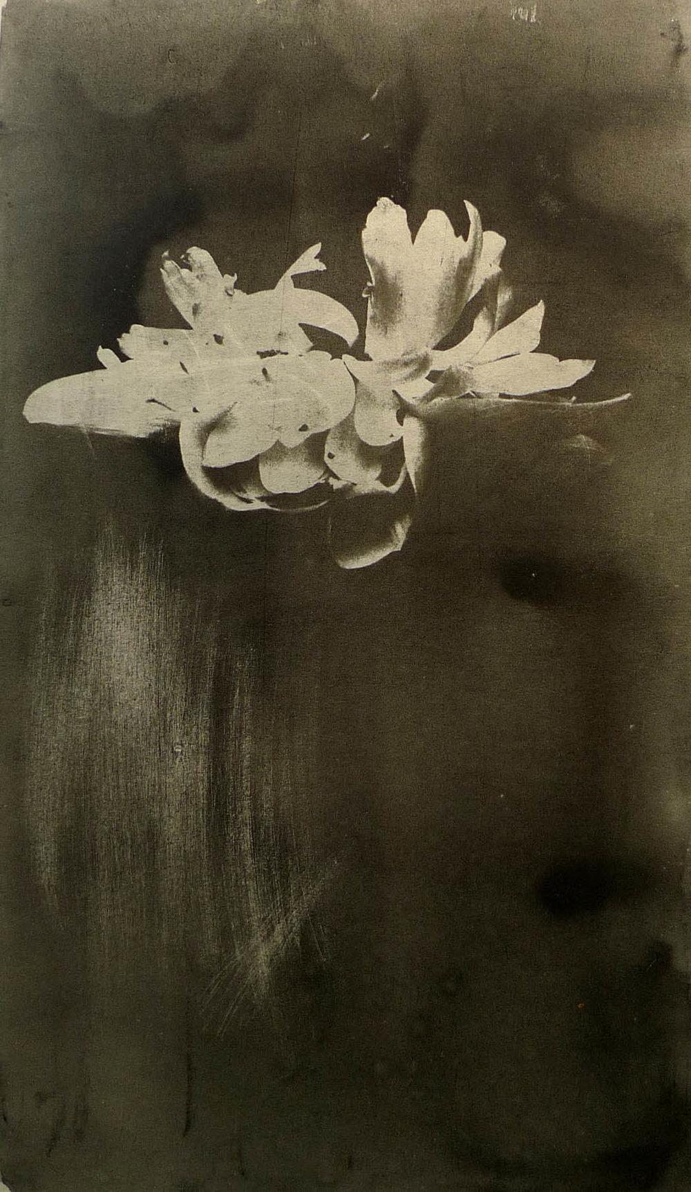 蓝晒 植物系列2 19x27cm(小图)副本.jpg