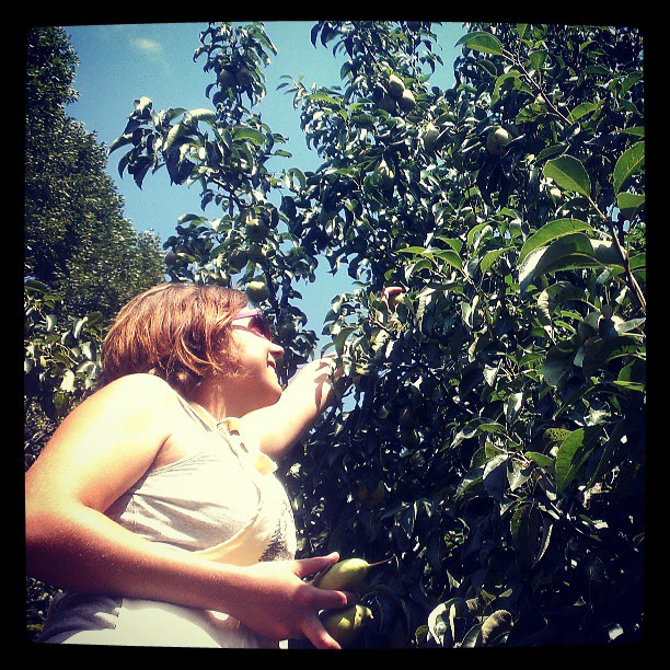 Maria picking pears in a minneapolis yard