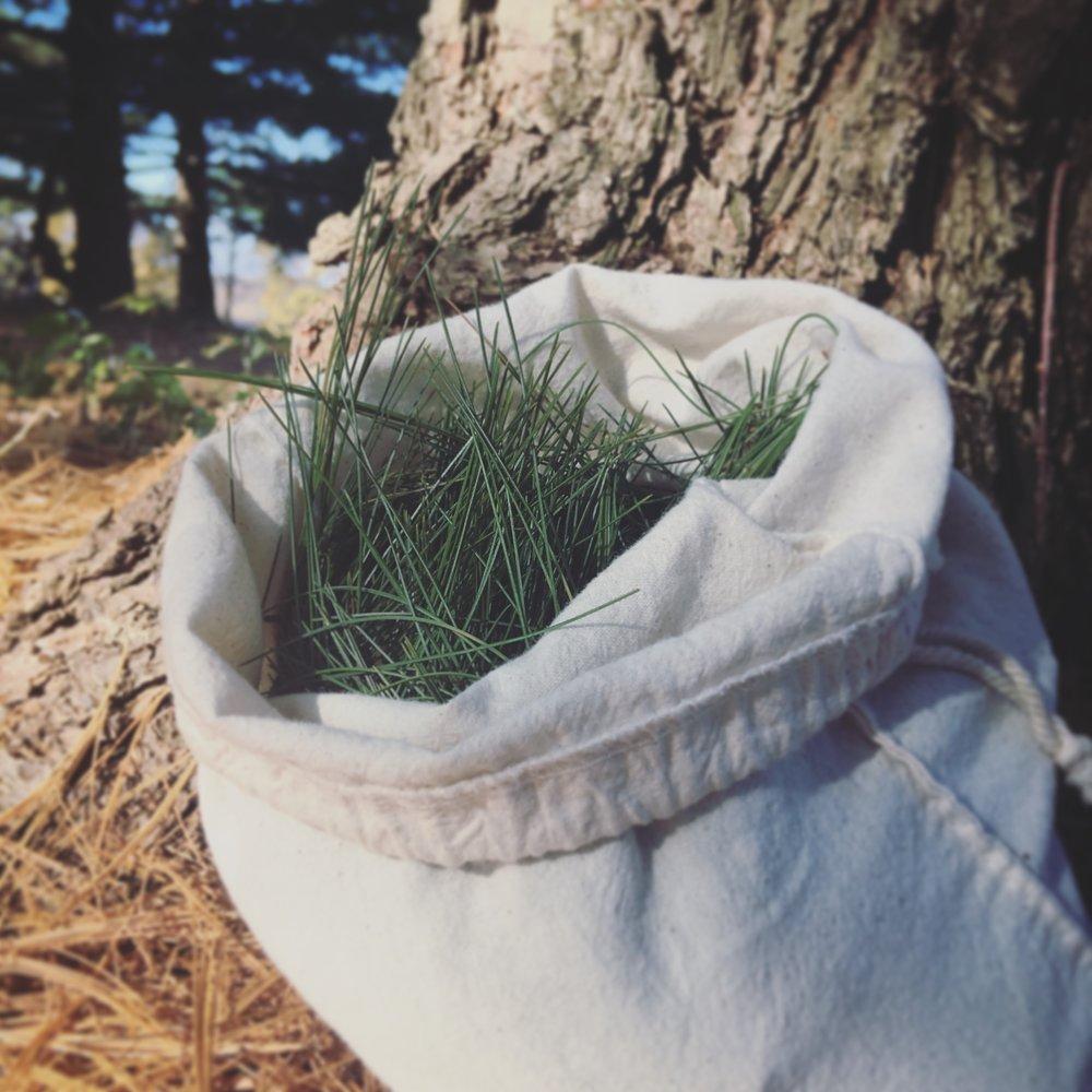 Bag of white pine needles