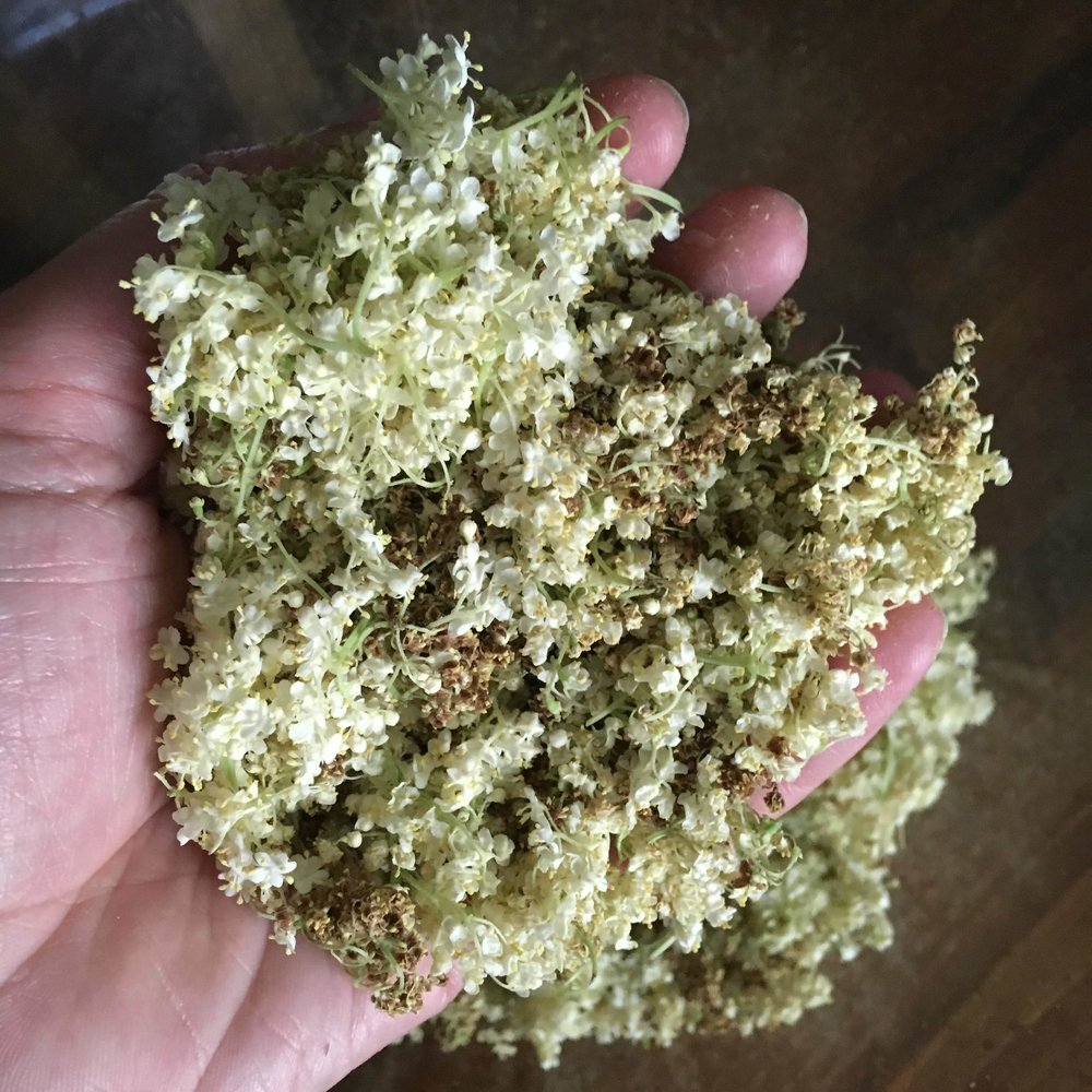 Elderflowers trimmed from the stem