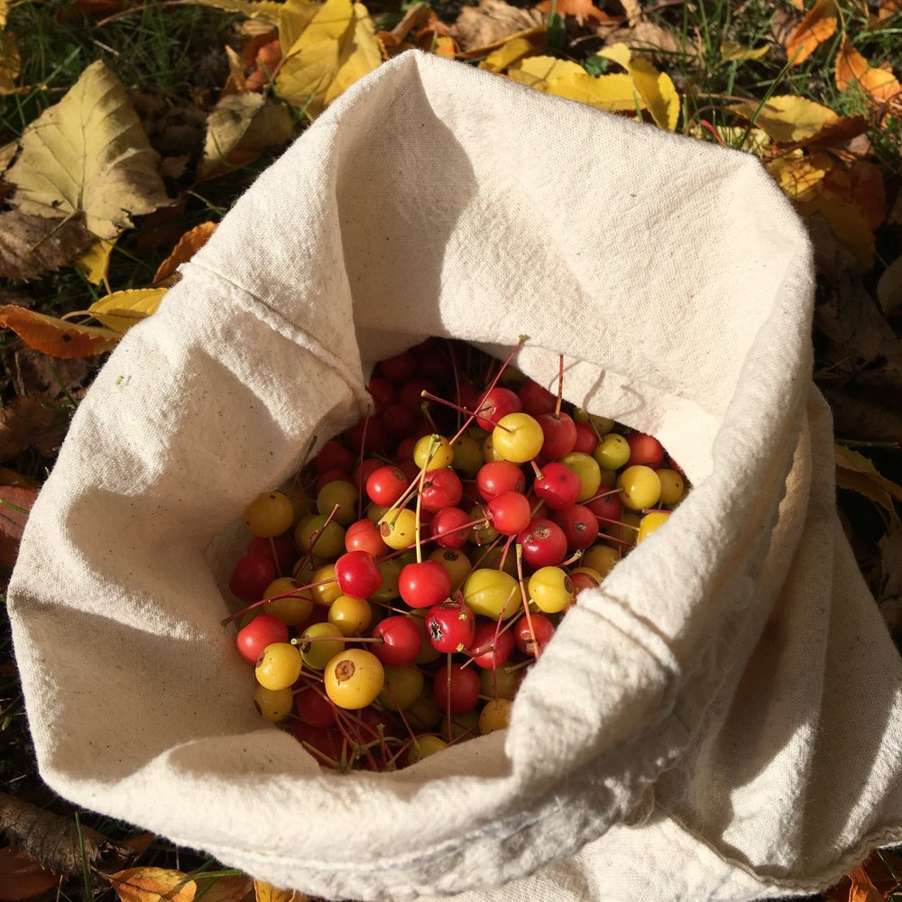 A harvest of crab apples ( Malus spp. )