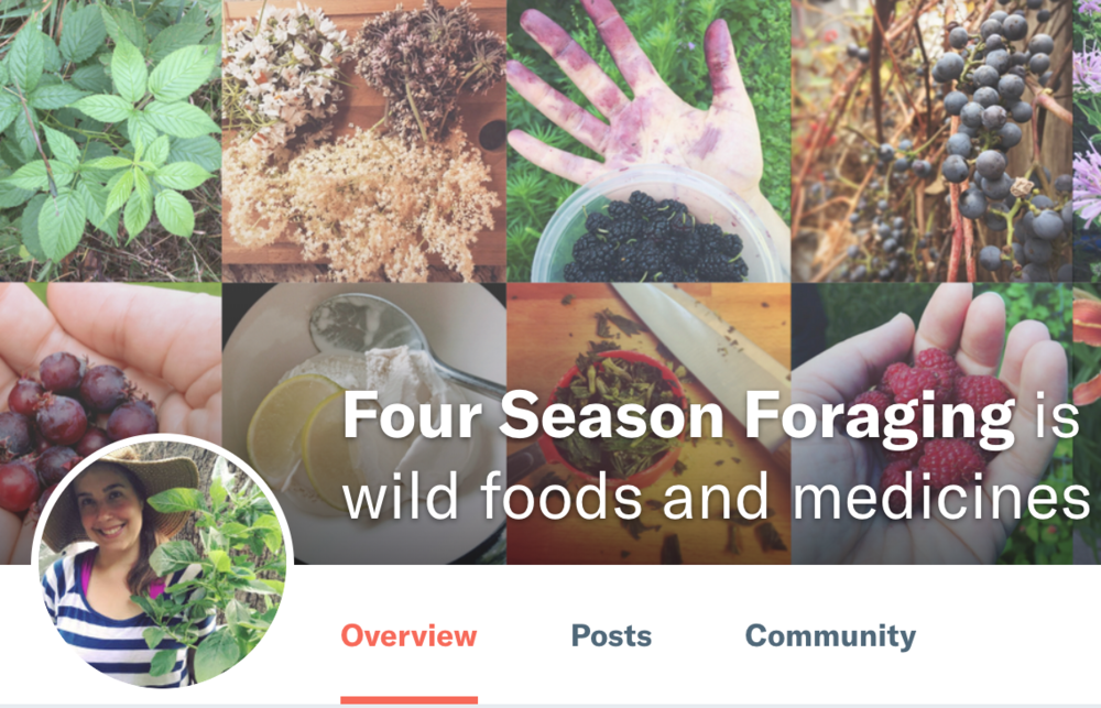 Four Season Foraging Patreon page
