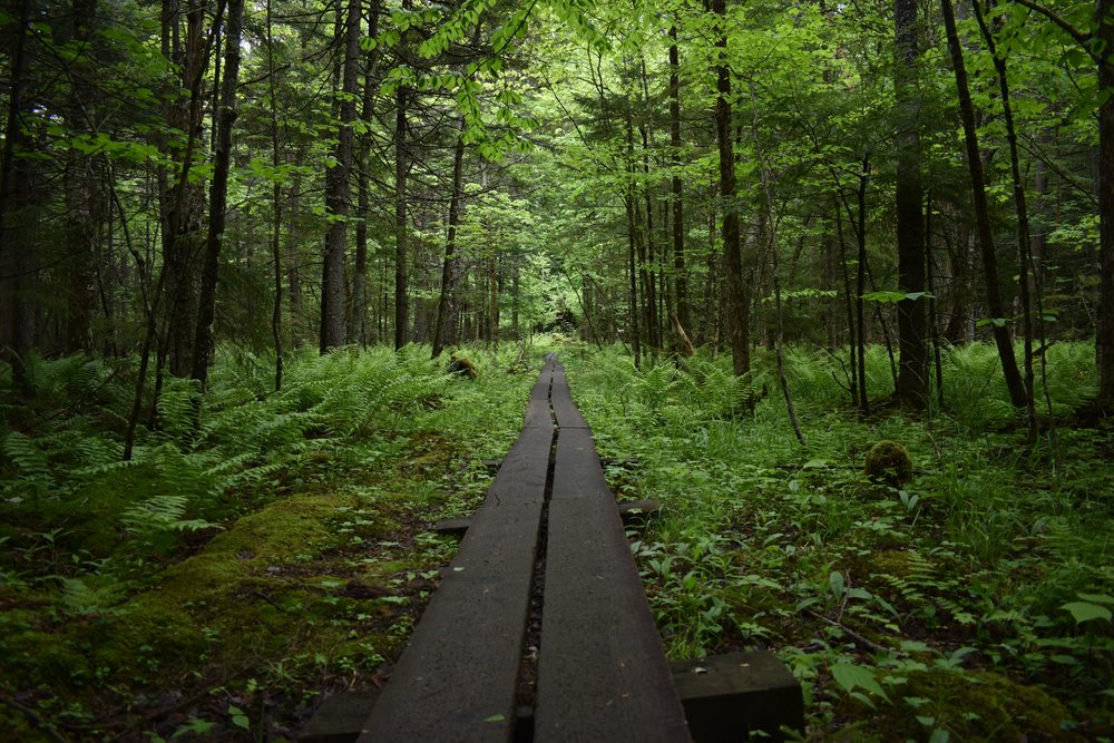 How much of this forest do you think is edible? The abundance of wild foods may surprise you.
