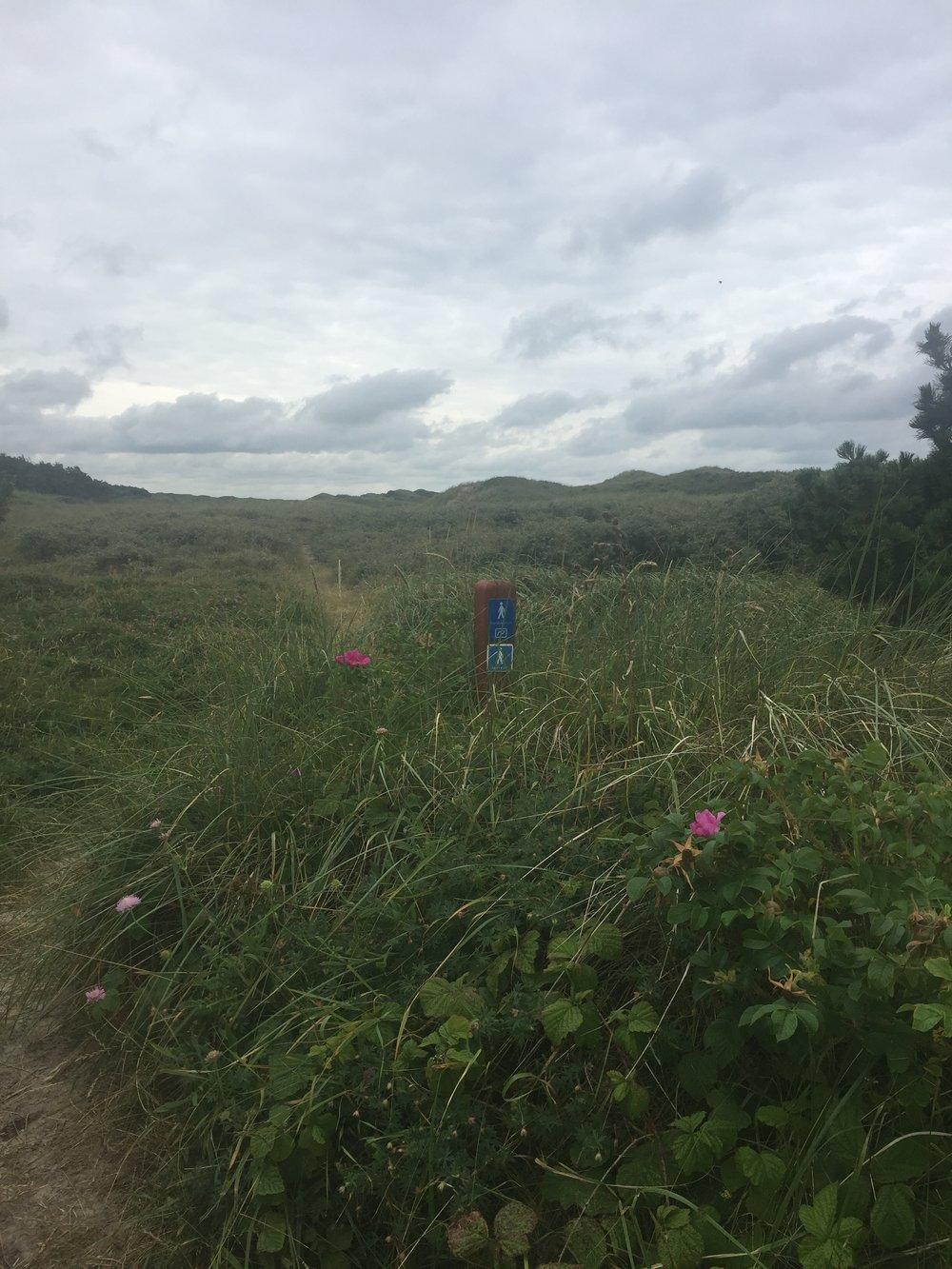 Merking av Hærvejen var ikke alltid lett å se, så her endte jeg å gå 3 km ekstra. Jeg forlater stranden for en stund og går og på noen gjengrodde stier.