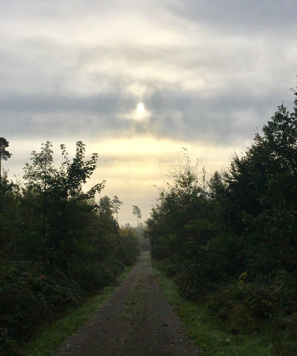 Det å starte dagen før solen klarer å bryte igjennom skylaget. Stillheten på skogsveien og vite at dagen ligger foran deg. Hva mer kan jeg ønske?