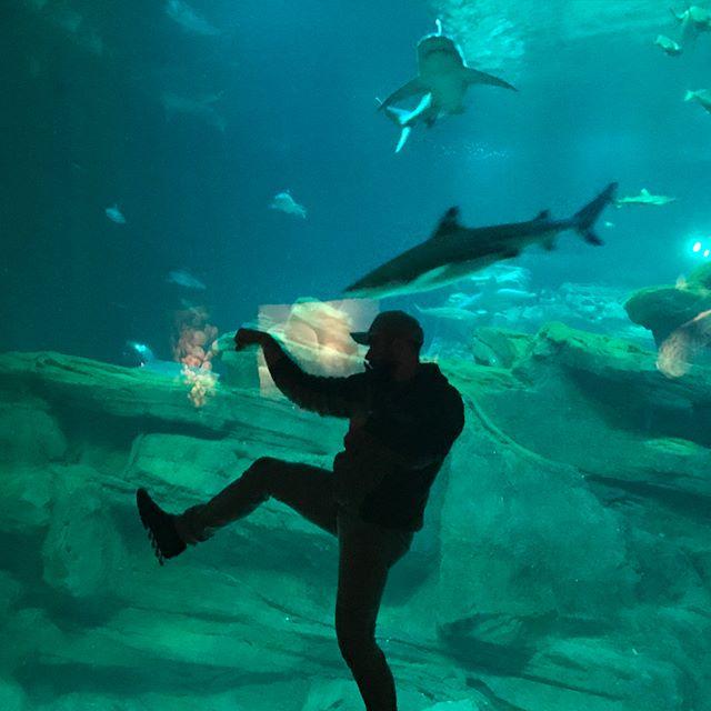 #tbt the usual shenanigans. Killing time during a storm at the aquarium in Paris #paris #france #aquarium #fish #rainydays #ninja