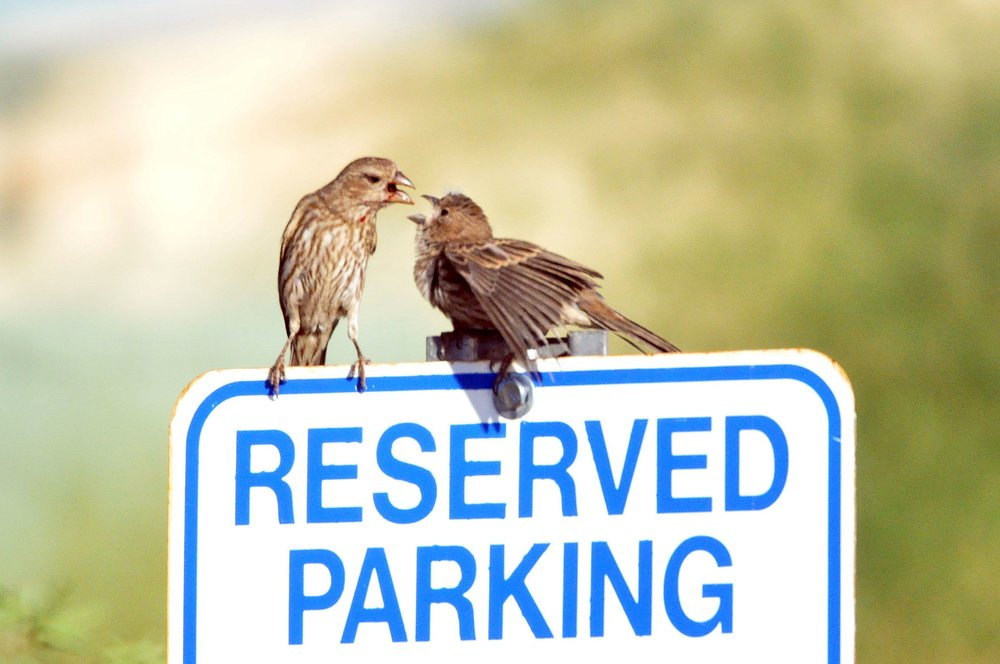 parking-birds.jpg