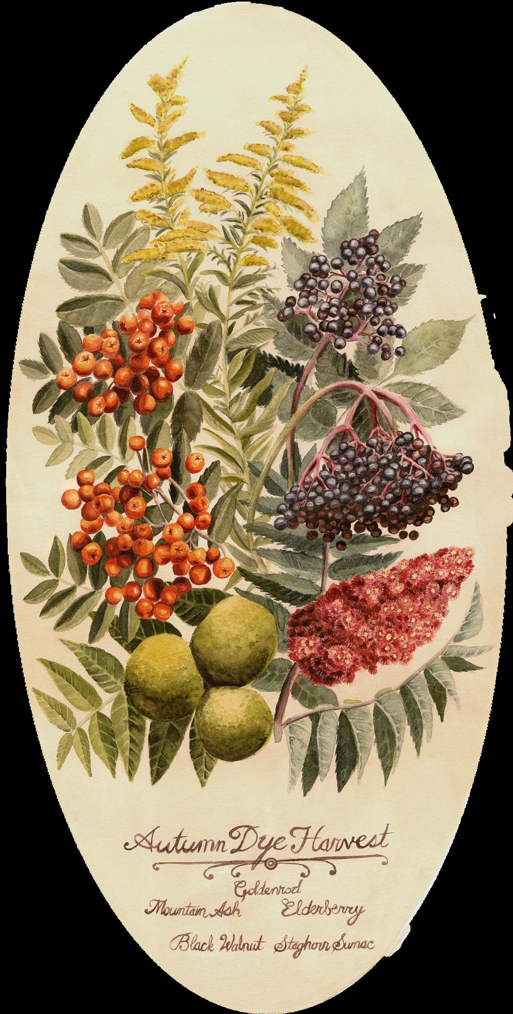 Autumn Dye Harvest