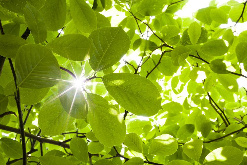 ENVIRONMENTAL - We strive to improve any environmental impact