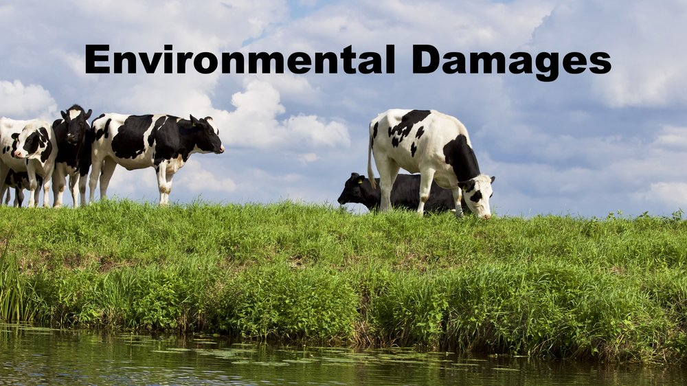 - Cattle are ruminants and release methane, a potent Greenhouse Gas.Runoff from the land, contaminating local water supplies.Emissions from manufacturing plants involved in meat production.