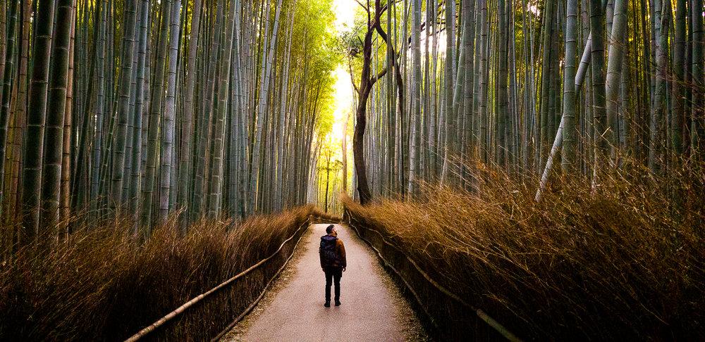 Arashiyama, Kyoto, Japan - Captured in Pro Mode in RAW at F/1.7 | 1/60 Sec | ISO 250