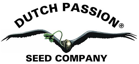 dutch_passion.jpg